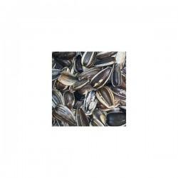 graine de tournesol crue 1/2 kg